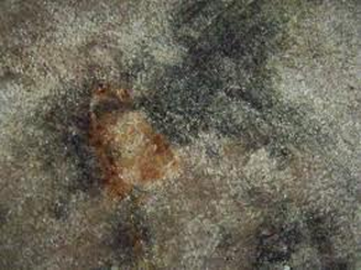 black mold testing could also become necessary